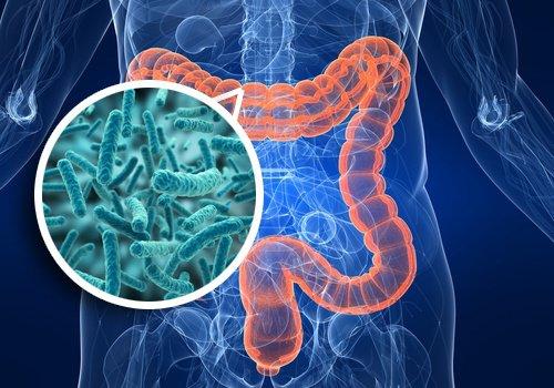 EMO, Microorganismos Eficientes Orgánicos, Tecnología Viva que nos Ayuda a Crear un Mundo Mejor y a Restablecer Nuestra Salud.