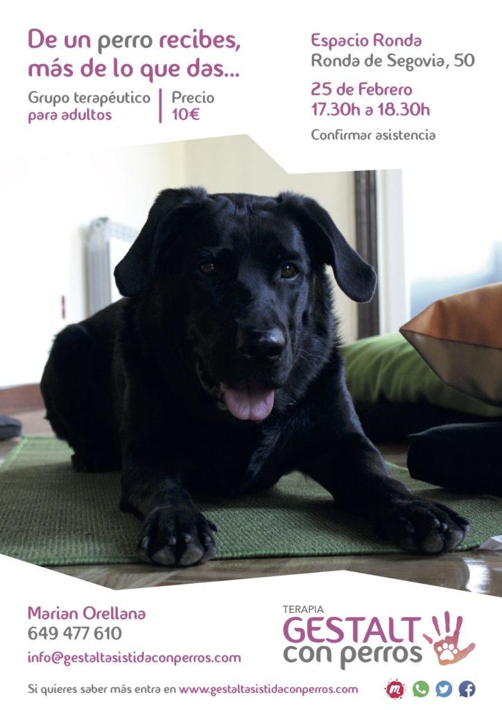 """Terapia Gestalt Asistida con Perros """"De un perro recibes más de lo que das"""""""